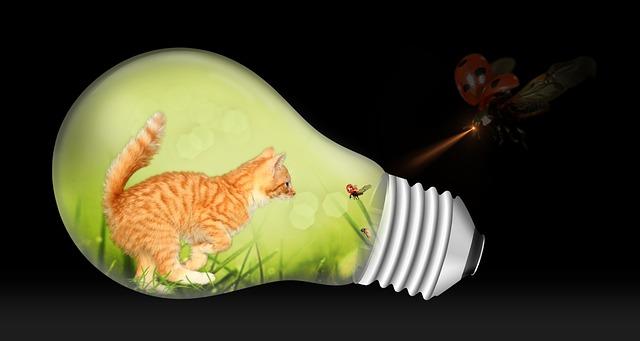 kočka, beruška, žárovka
